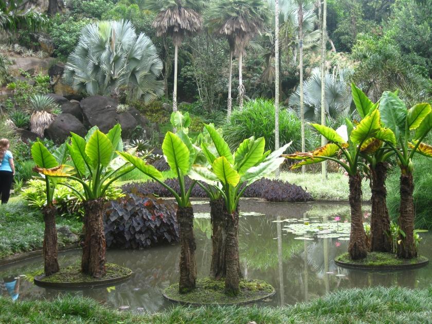 Rocks and Ponds area of the Sitio Burle Marx in Rio de Janeiro.