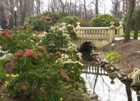 Pieris by the lower bridge at the Halifax Public Gardens.
