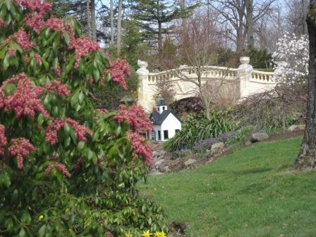 Pieris japonica (Japanese andromeda), Magnolias, Azaleas, and the UpperBridge at the Halifax Public Gardens.