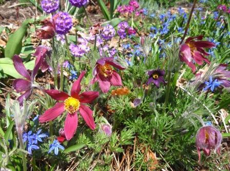 Spring Bouquet at the Halifax Public Gardens