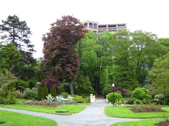 Acer platanoides 'Schwedleri' (Red Norway maple) at the Halifax Public Gardens