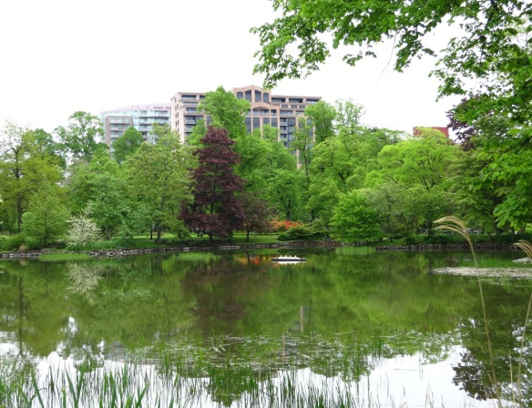Azaleas reflecting on Griffins pond at the Halifax Public Gardens