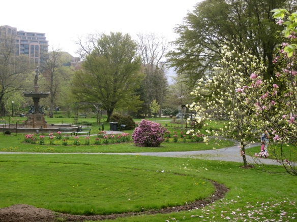 Magnolias, tulips and azaleas at the Halifax Public Gardens