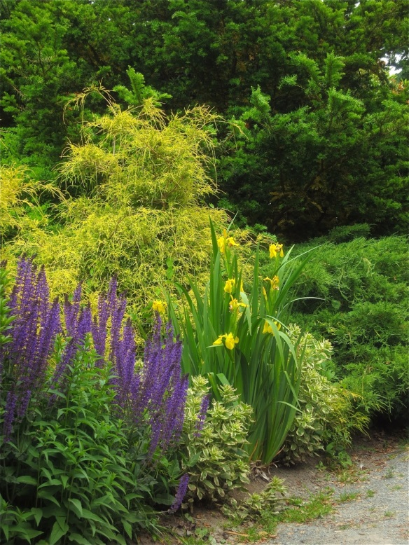 Chamaecyparis, salvia and irises make a winning combination at the Halifax Public Gardens