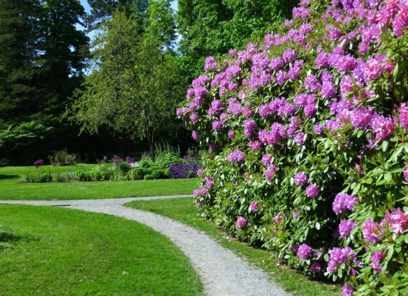 Rhododendrons and the blue perennial bed at the Halifax Public Gardens