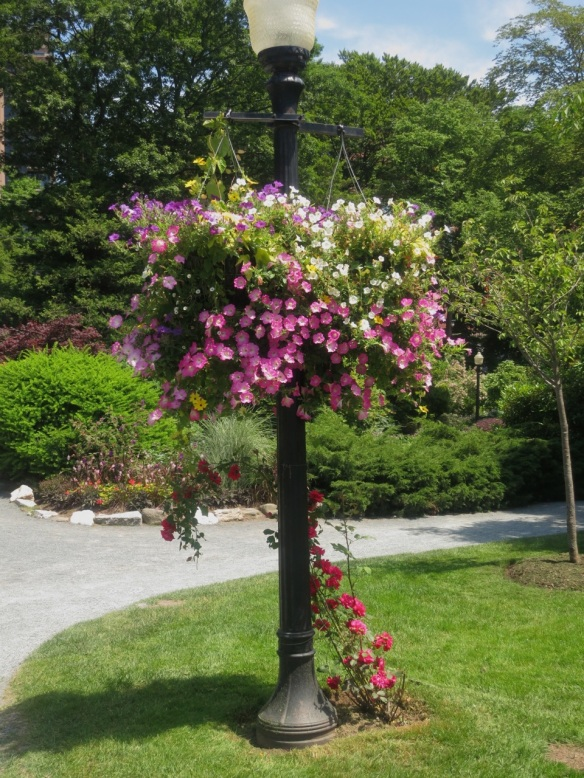 Hanging basket at the Halifax Public Gardens