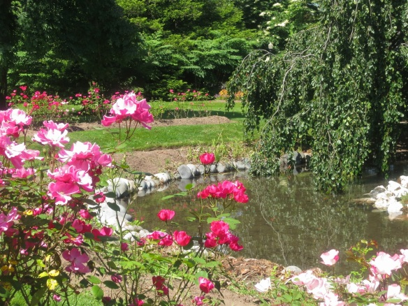Roses at the Halifax Public Gardens