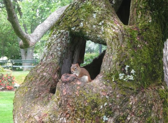 Squirrel at the Halifax Public Gardens