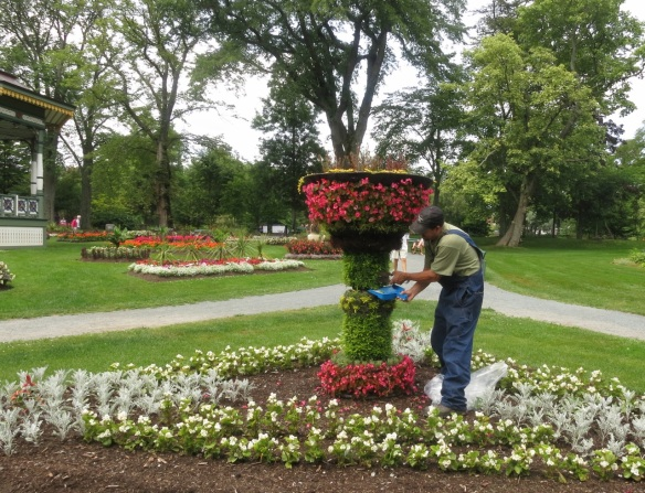Tidying up the living urn at the Halifax Public Gardens
