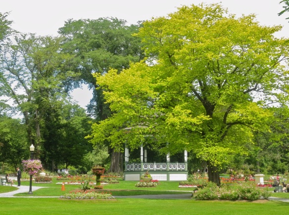 Ulmus glabra var. lutescens (golden elm tree) at the Halifax Public Gardens