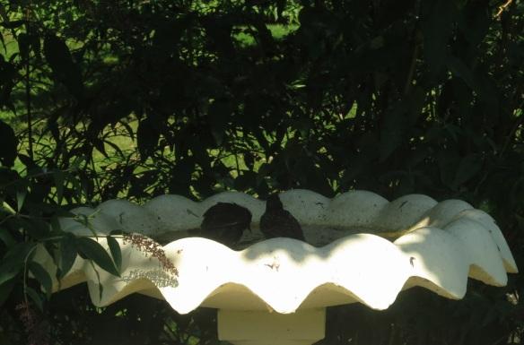 Bird bath at the Halifax Public Gardens