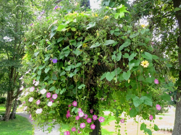 Hanging baskets at the Halifax Public Gardens