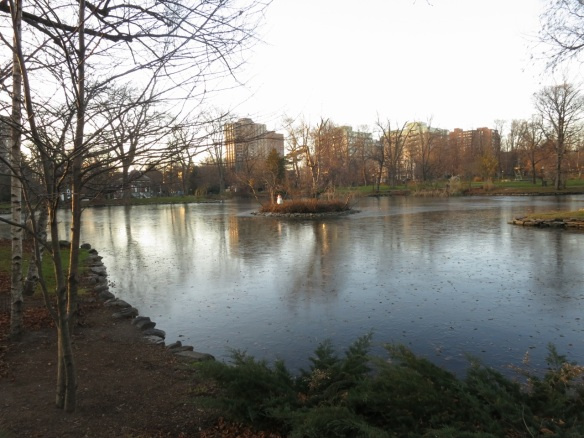 Frozen Griffins pond on a cold November morning.