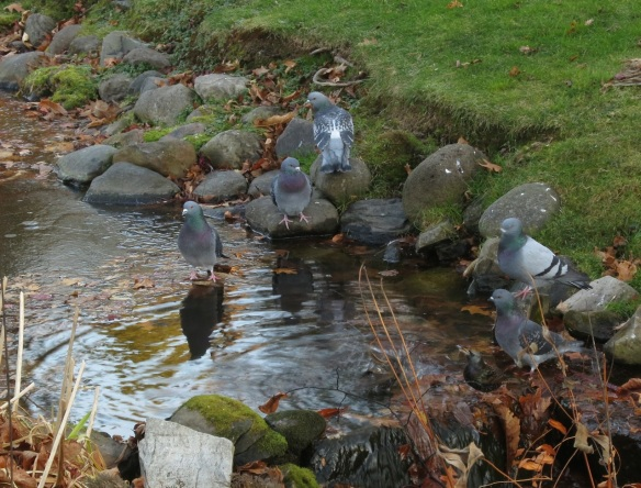 Pidgeon party at the Halifax Public Gardens