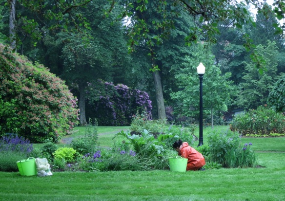 Tracy working hard in the rain at the Halifax Public Gardens