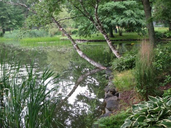 Betula (Birch) and Hostas on Griffin's Pond at the Halifax Public Gardens