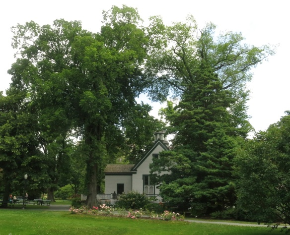Ulmus americana (American Elmtree) at the Halifax Public Gardens