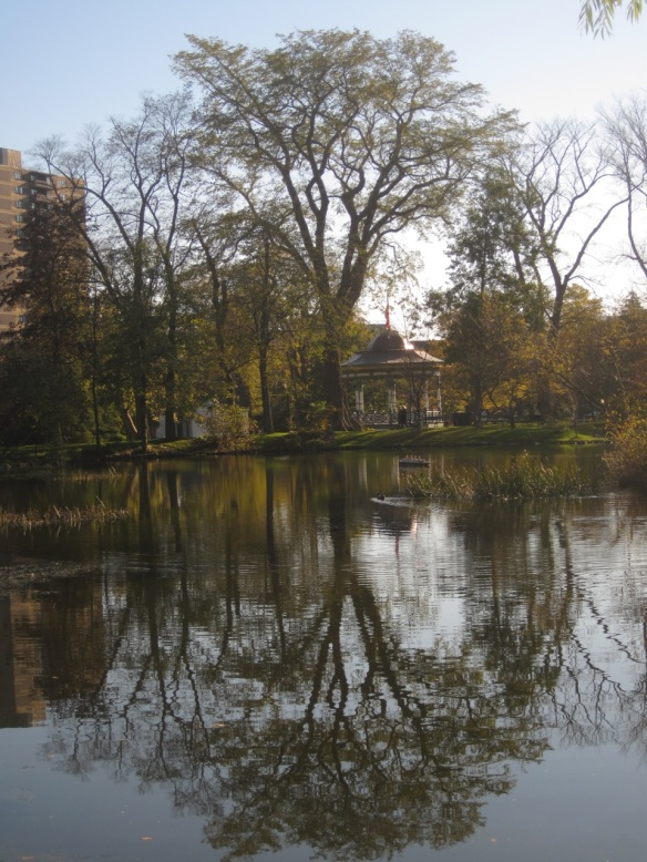 Ulmus americana (Elmtree) at the Halifax Public Gardens