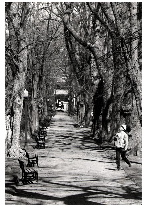 The Grande Alleé at the Halifax Public Gardens before Hurricane Juan
