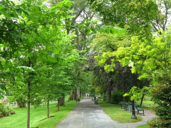 Princeton Elm (Ulmus americana 'Princeton' at the Halifax Public Gardens