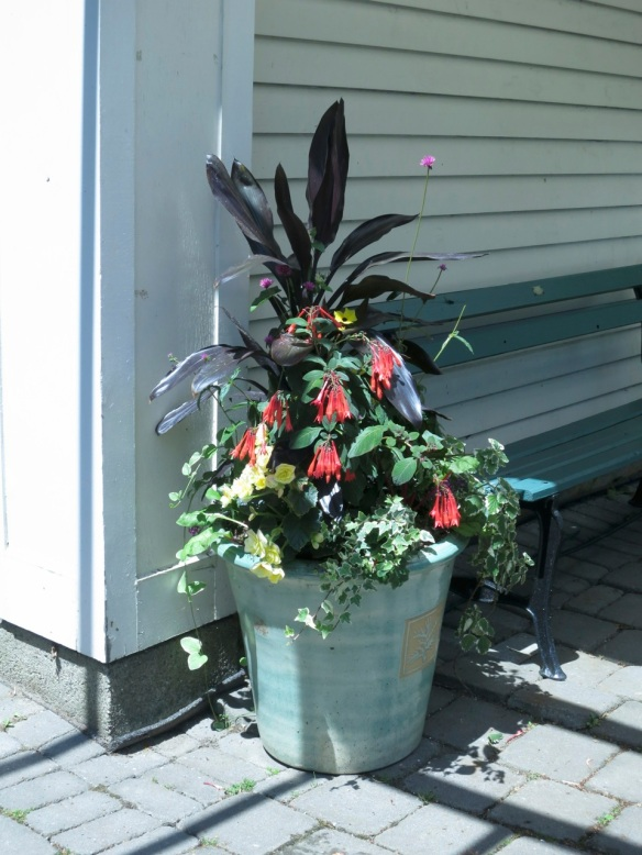 Winner of the Garden Day container contest at the Halifax Public Gardens