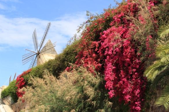 Es Jonquet, Palma de Mallorca
