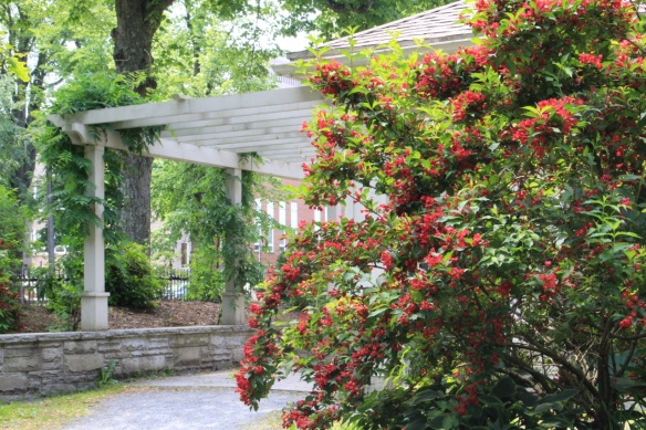 Red Weigela at the Halifax Public Gardens