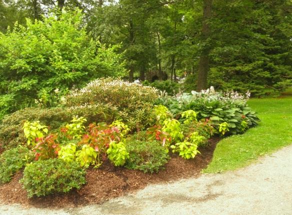 Bog at the Halifax Public Gardens