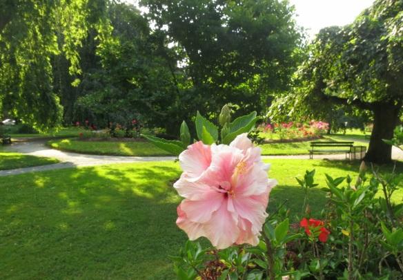 Hibiscus at the Halifax Public Gardens