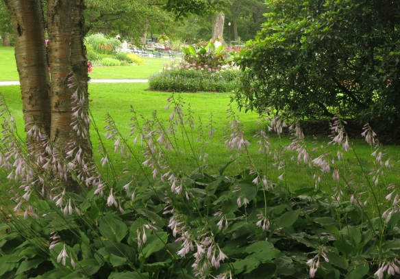 Hostas at the Halifax Public Gardens
