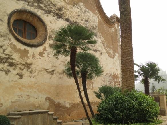 (Chamaerops humilis) Fan palm in Alfabia gardens, Mallorca