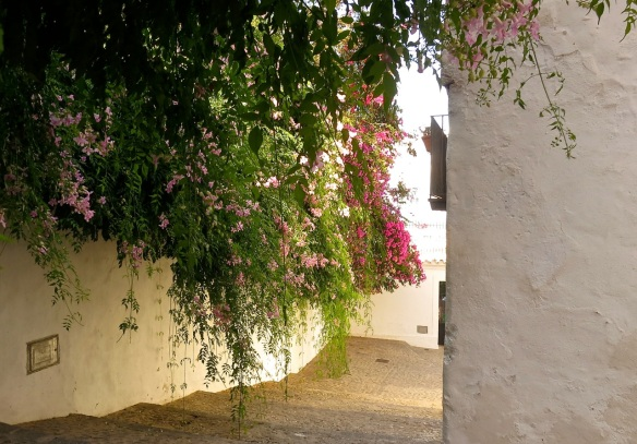 Bougainvillea and Podranea ricasoliana (Pink trumpet vine) in Ibiza