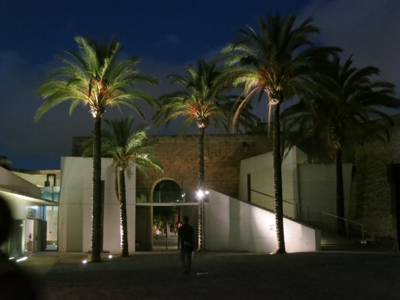 Phoenix dactylifera (date palm) at Es Baluard in Palma de Mallorca