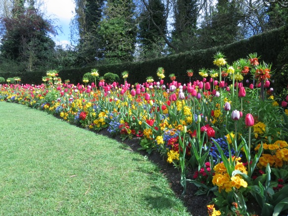 Spring planting in Regents park London