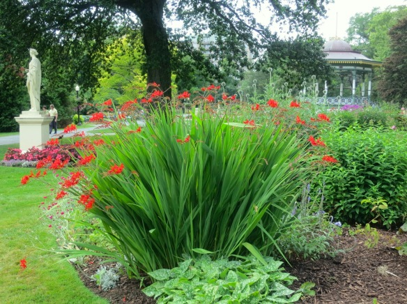 Crocosmias in one of many perennial beds at the Halifax Public Gardens