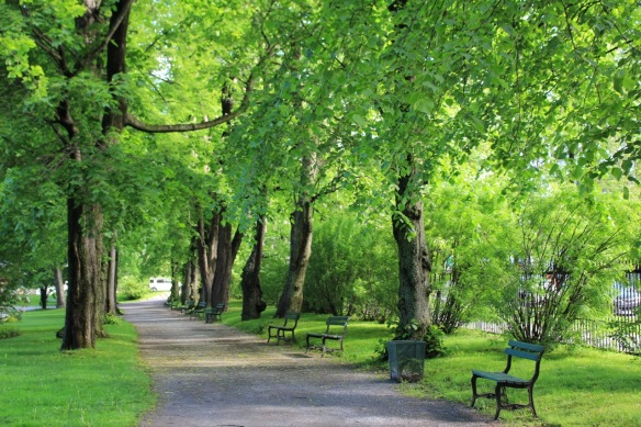 One of the alleés at the Halifax Public Gardens