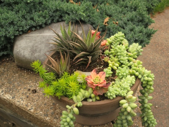 Container using succulents