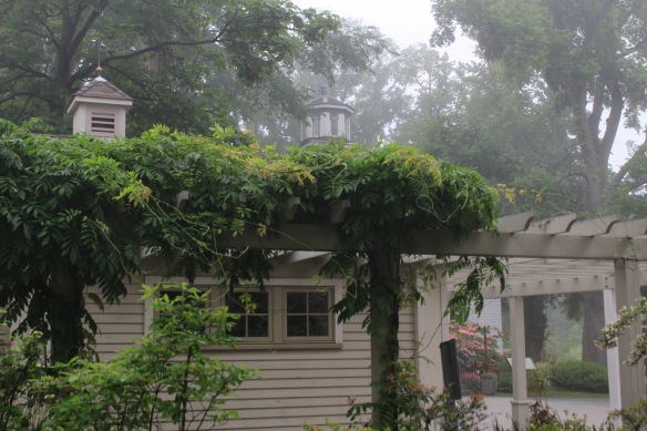 The cupola from Horticultural Hall peaking out from the fog at the Halifax Public Gardens