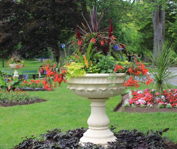 Spilling over. One of the lovely urns surrounding the bandstand at the Halifax Public Gardens in 2014