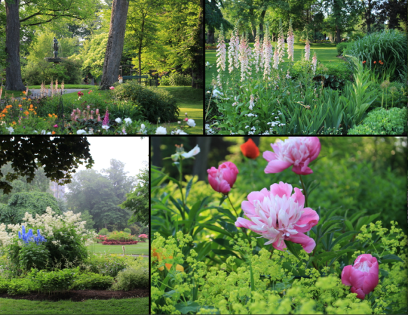 Perennial borders  at the Halifax Public Gardens. Clockwise: mixed border, Foxgloves (Digitalis), Peonies and Lady's mantle (Alchemilla mollis) and the 'white' bed by the Soldier's fountain.