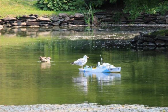 Gull on the Sackville model at the Halifax Public Gardens