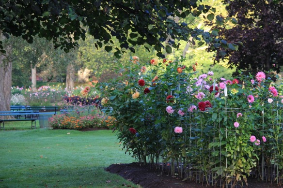 Dahlia beds at the Halifax Public Gardens.
