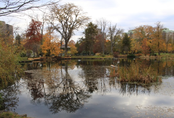Ulmus americana (American Elm tree) reflected on Griffin's Pond at the Halifax Public Gardens