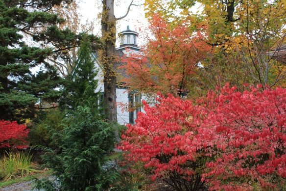 Euonymus alata (Burning bush) front right and left, and Acer griseum ( Paperbark maple) centre , frame Horticultural Hall at the Halifax Public Gardens